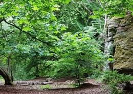 Weem Woodland Walks and Trails