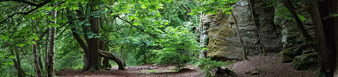 Weem Woodland Walks and Trails