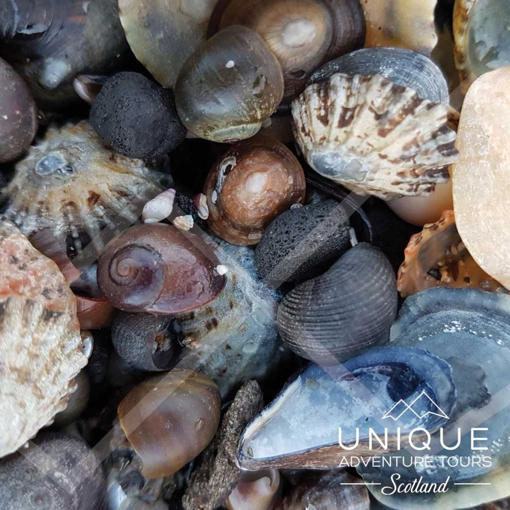 Sea Shells on the Scottish east Coast