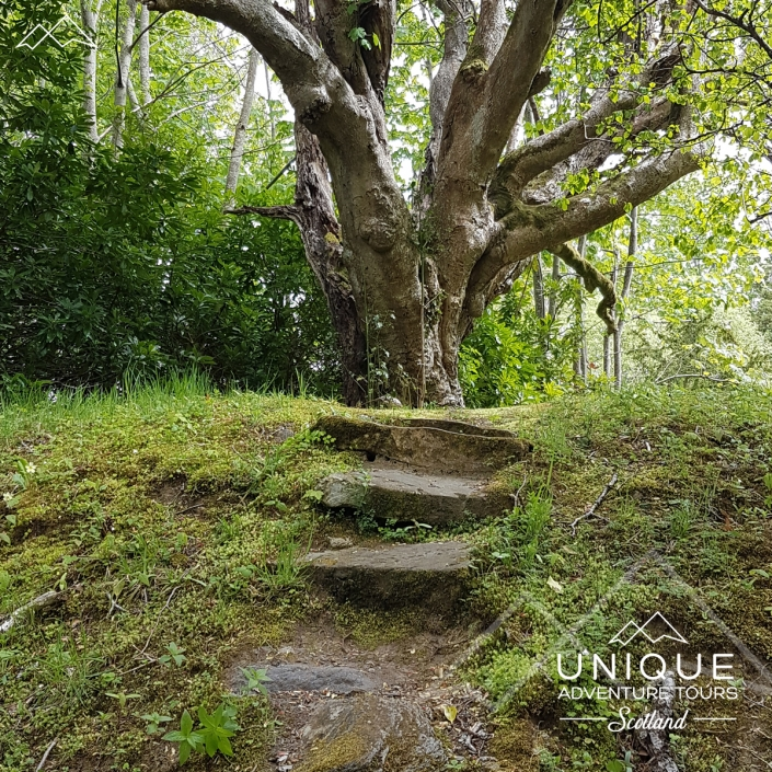 Ancient Tree at Finlarig Castle Ruins