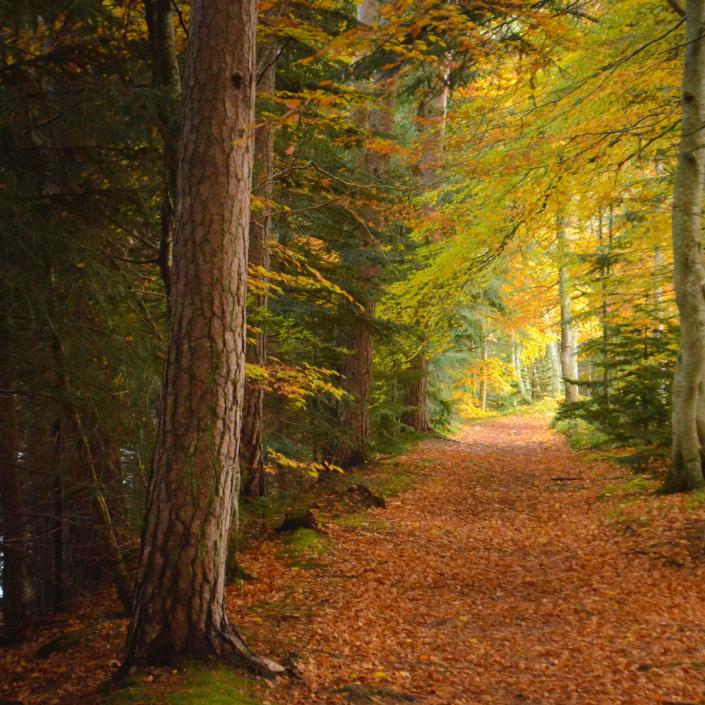 Top 10 Autumn Walks