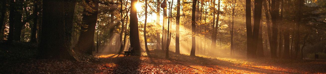 Top 10 Autumn Walks in Perthshire Scotland